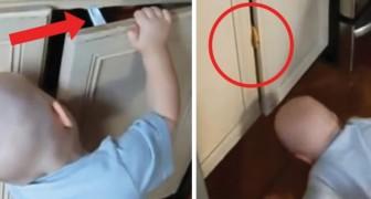 Un bebè se cansa de robar la merienda pero...ALGUNO disfruta de su botin en su lugar