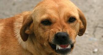Wetenschappers bevestigen en verklaren de manier waarop honden goede mensen van slechte mensen onderscheiden