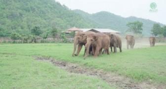 Un nouvel éléphanteau orphelin arrive dans le refuge: la famille l'accueille de la plus douce des façons