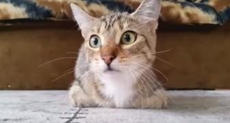 Un gatto che guarda un horror: le sue espressioni vi faranno immedesimare al 100%
