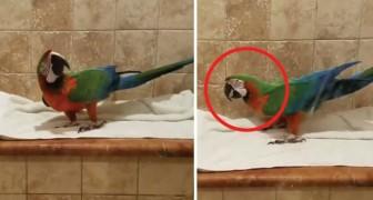Il posto migliore per cantare come mai faremmo in pubblico è la doccia, anche per i pappagalli