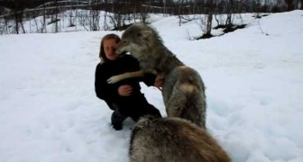The encounter between Anita and the Wolves
