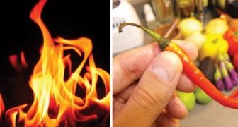 Un contadino Gallese crea per sbaglio il peperoncino più piccante al mondo