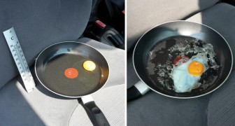 L'expérimentation de l'œuf qui nous explique ce qui se passe quand nous laissons les animaux dans la voiture