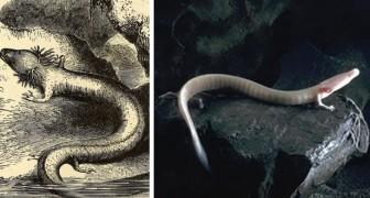 Découverte de nouveaux œufs d'amphibiens millénaires: l'éclosion sera un événement mémorable