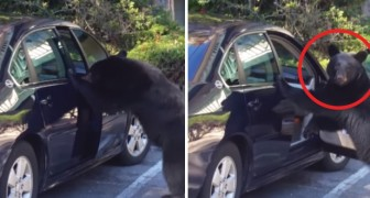 Avvistano un orso in strada ma è ciò che avviene dopo a lasciarli esterrefatti