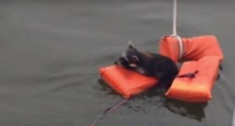 L'Orsetto lavatore sta affogando, ma i passeggeri della barca sanno come salvargli la vita