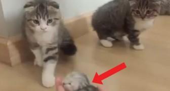 Ze maken kennis met het nieuwste lid van het gezin: hun reactie liegt er niet om!
