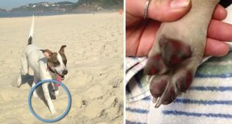 Tutti i proprietari di cani dovrebbero conoscere i rischi di farli camminare su superfici roventi