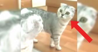 Asiste al momento en donde un gato se da cuenta de ser...un gato!