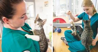 Gezocht: kattenknuffelaar: deze kliniek stroomt over van curricula vitae