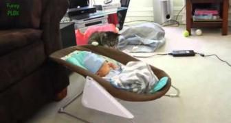 Gatti incontrano i bambini per la prima volta