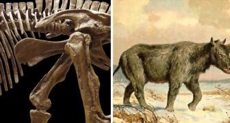 Dimenticate arcobaleni e criniera: ecco com'era l'ultimo unicorno siberiano vissuto sulla terra