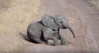 Dit olifantje krijgt een driftbui midden op de weg, maar mama reageert... als een echt mama!