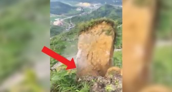 In China, a mountain landslide covers part of a forest!