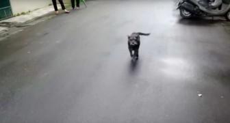 Le chien s'était perdu depuis 6 jours: quand la maîtresse le retrouve, sa réaction est adorable