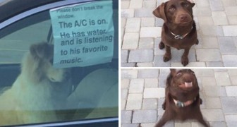 30 tweets amusants sur les chiens dans lesquels vous ne pourrez que vous reconnaître