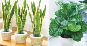 12 plantes qui survivent même dans le coin le plus sombre de votre maison