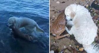 Il cane nota qualcuno muoversi in acqua... il suo intervento gli salva la vita!