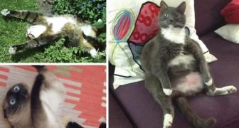 19 gatti che hanno trovato l'erba gatta... E che sono andati in tilt subito dopo!