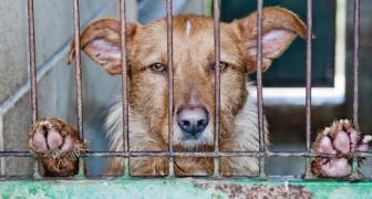 Loi CHOC en Espagne: une amende jusqu'à 5000 euros pour ceux qui SAUVENT un animal abandonné