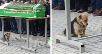 Deze hond legt zich niet neer bij de dood van zijn baasje: bij de begrafenis zagen ze hem staan bij de kist