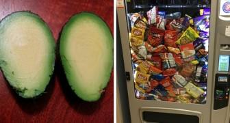 16 volte in cui qualcuno è stato fin troppo fortunato con il cibo