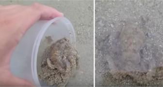 Er rettet am Strand eine Krake, aber was sie sofort danach macht, hätte er nie erwartet