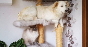 Is it possible for a dog to act like a cat? Check it out! :)