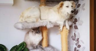 10 Hunde, die sich wie Katzen benehmen