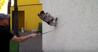 The smartest dog ever