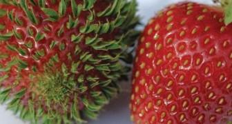 15 images terrifiantes de fruits et de légumes qui commencent à germer TROP TÔT