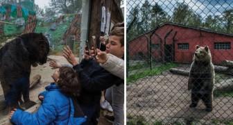 Queste toccanti immagini mostrano cosa vuol dire per un animale vivere in uno zoo