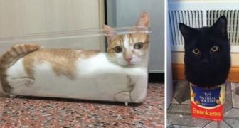 21 fois où les chats ont pensé: si j'entre dedans, je m'y mets... Et c'est ce qu'ils ont fait
