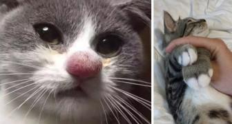 17 Fotos von Katzen, die den Kampf gegen die Bienen verloren haben