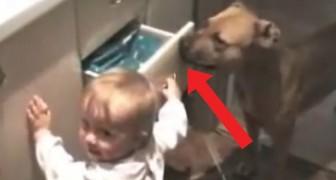 L'interazione fra questa bambina e il suo cane conferma che i cani sono dei babysitter insostituibili