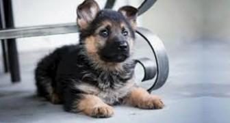 En studie bekräftar att hundar kan känna igen en dålig människa. Så här...