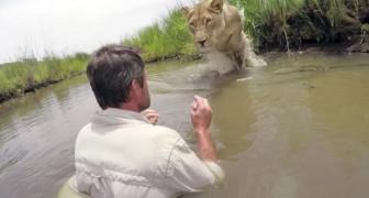 7 jaar na het redden van een leeuwin vind hij haar terug in de wateren van een rivier: de ontmoeting tussen de twee beneemt je de adem
