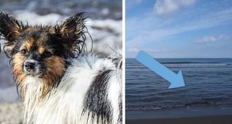 Il tuo cane ama giocare in acqua? L'esperienza di questa famiglia ti farà conoscere un rischio inaspettato