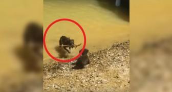 Questo cagnolino è morto 2 ore dopo aver trascorso una giornata al lago: ecco cosa è successo