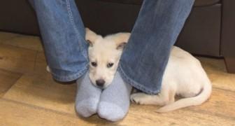 Sbadiglia, ci fissa, si appoggia sui nostri piedi: 8 modi in cui il cane ci sta comunicando qualcosa