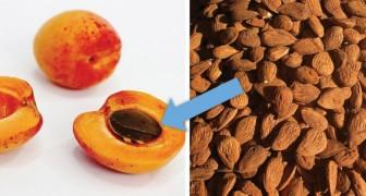Een man vergiftigt zichzelf met abrikozenpitkernen in de overtuiging een tumor te bestrijden
