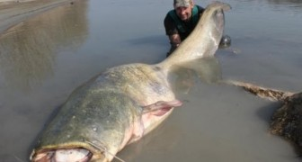 Fishing a 100KG fish