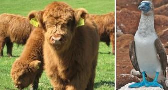 10 rarissimi animali che non crederai esistano davvero