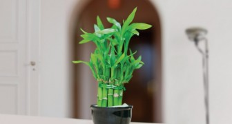 Drei Pflanzen die positive Energie und Fülle in unser Haus bringen