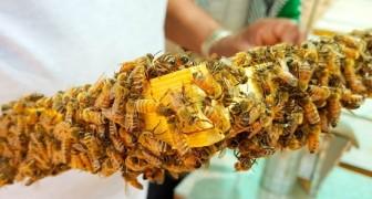 Eine neue Studie enthüllt: Neonikotinoide sind im Honig auf der ganzen Welt zu finden