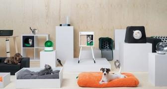 IKEA hat kürzlich eine Möbellinie herausgebracht, die ganz den Haustieren gewidmet ist. Und sie ist jetzt schon ein riesen Erfolg
