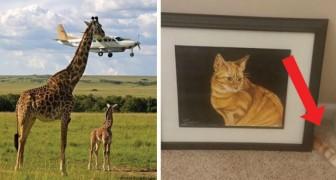 14 foto impressionanti scattate proprio nell'istante giusto!