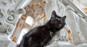 Les gardiens de l'Ermitage: la protection des œuvres du musée est assurée par une colonie de chats