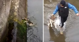 The rescued dog